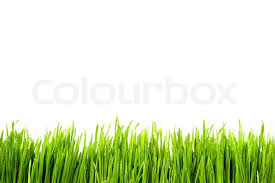 cool green and white backgrounds. Wonderful Green Green Grass With Water Drops Isolated On White Background  Stock Photo  Colourbox Inside Cool And White Backgrounds E