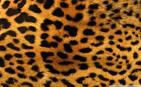 cheetah wallpapers 1080p 3788d75
