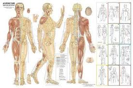 Acupuncture Chart 36 X 24