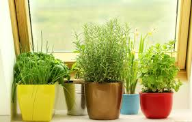 indoor kitchen garden. Indoor Herb Garden Questions Kitchen E