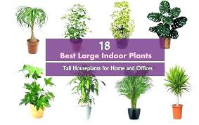 decoration best indoor house plants that like shade safe around cats