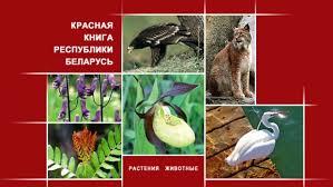 реферат Красная книга Республики Беларусь третье издание  Реферат на тему красная книга беларуси