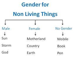 Gender For Non Living Things Objects Gender Masculine And