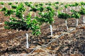 7 Easily Propagated Fruits For Transforming Your Backyard Into A When Do You Plant Fruit Trees