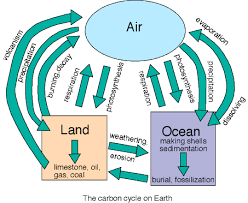 Carbon Cycle Flow Chart Planetary Science