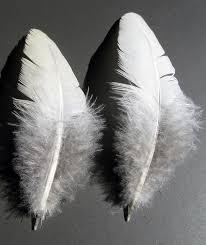 羽 鳥 クイル Pixabayの無料写真
