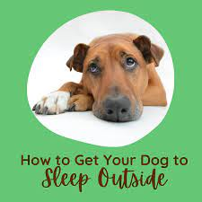 To know the best practices for how to keep a dog house warm in the winter, you need to understand your dog. How To Train Your Dogs To Sleep Outside Pethelpful