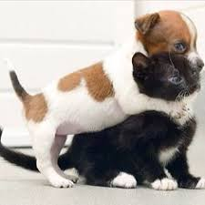 cute puppy and kitten best friends. Puppy Kitten Hug Kittens And Puppies Cute Dogs Cats Best Friends