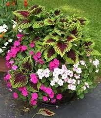 Go Monochromatic Try An All White Garden  Weidners GardensContainer Garden Shade Plants
