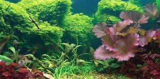 Fish Tank Background Comeinpeace Co