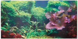 Aquarium Backgrounds 2019 Top 5 Aquarium Backgrounds Dr Foxs Advice Reviews