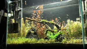 planted aquarium aqua scaping ada 60 h day 90 2nd version