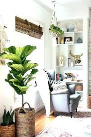 Indoor Plants For Living Room Living Room Plants Decor Home Decor Plants  Living Room Com Decorate .