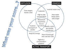Venn Diagram Of Diffusion Osmosis And Active Transport Diffusion Osmosis Active Transport Venn Diagram