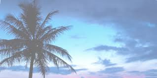 Group of Header Palm Trees