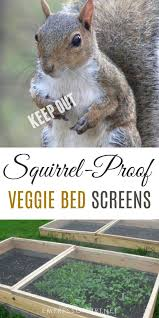 squirrel screens are one way to keep squirrels and other wild animals from digging in raised