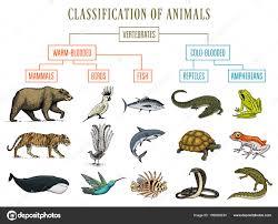 Fish Snake Crocodile Whale Classification Of Animals