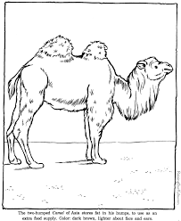 Small Picture Camel coloring pages Zoo animals 012