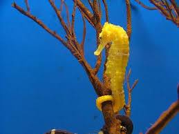 What Animal Classification Is A Seahorse Socratic