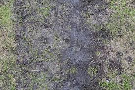 Dirt grass texture seamless High Resolution Mud Ground Wet Footpath Road Black Dirt Small Green Yellow Grass Foliage Seamless Texture Turbosquid Mud Footpath Dark Dirty Short Grass Texture Sf Textures