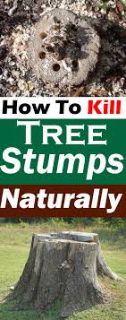 killing tree stumps naturally is safe and doesn t require chemicals in this article