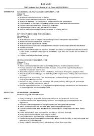 Hr Coordinator Cv Sample Human Resource Coordinator Resume Samples Velvet Jobs