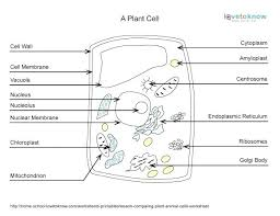 Comparing Plant And Animal Cells Venn Diagram Answers Animal And Plant Cell Worksheets Labelling Animal And Plant