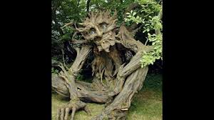 10 strange trees in the world mysterious trees 10 most strange and unique trees facts duniya