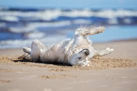 Lettini per spiagge : La spiaggia di pluto