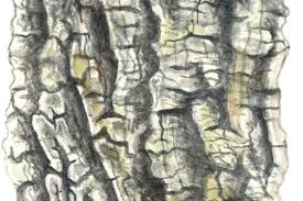 How To Identify A Tree By Its Bark Discover Wildlife