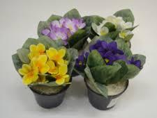 Декоративно-цветущие <b>растения</b>, комнатные цветы купить в ...