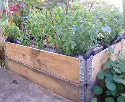 Small Picture Wicking Beds Sustainable Communities South Australia Inc