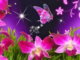 beautiful erflies and flowers beautiful erflies and flowers