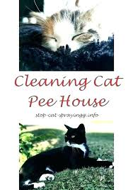 how to get cat urine smell out of clothing couch clothes