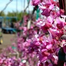 photo of garden gate nursery pasco wa united states