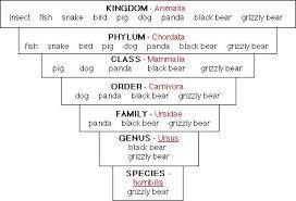 Kingdom Classification Chart Animal Kingdom