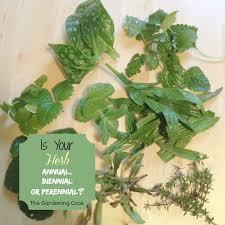 is your herb annual biennial or perennial