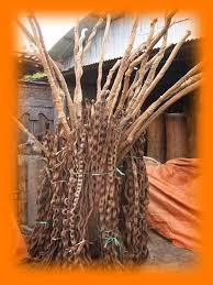 Branch Wood Decoration Snake Wood