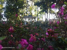 coastal georgia botanical garden