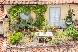 15 plants for terrace gardening in