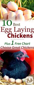 Different Types Of Chickens Chart The 10 Best Egg Laying Chickens