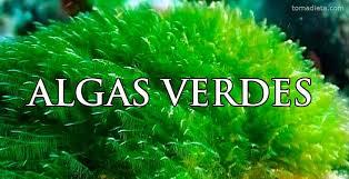 algas verdes comestibles tipos y