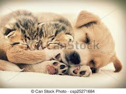 puppies and kittens sleeping. Beautiful Puppies Puppy And Kittens Sleeping Together  Csp25271684 In Puppies And Kittens Sleeping A