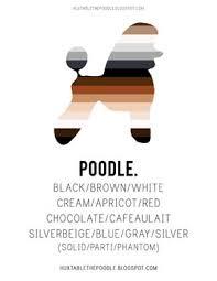 Huxtable The Poodle Toy Poodle Blog Parti Poodle Parti