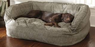 Dog Sofa Bed Costco Furniture Pinterest