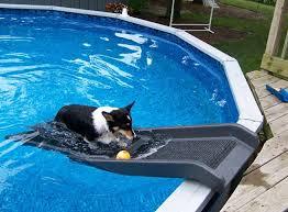 backyard pool with slides. Dog Backyard Pool Slide With Slides C