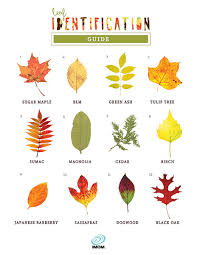 Ohio Leaf Identification Chart Leaf Identification Game Imom