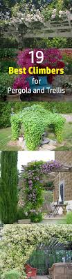 Climbers And Wall Shrubs For ShadeRHS GardeningClimbing Plants That Like Shade