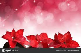 Weihnachtsstern Pflanze Für Weihnachten Auf Rosa Hintergrund