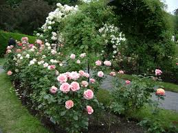 Small Picture 35 Rose Garden Design Planning Rose Gardens Small Garden